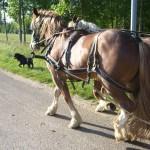 Les chevaux et le chien de la Ferme de Ramon